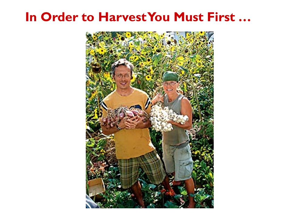 In Order to Harvest You Must First …