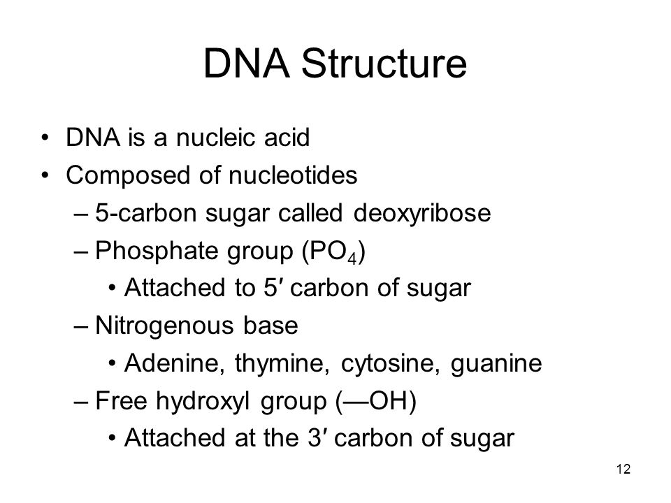 DNA Structure DNA is a nucleic acid Composed of nucleotides