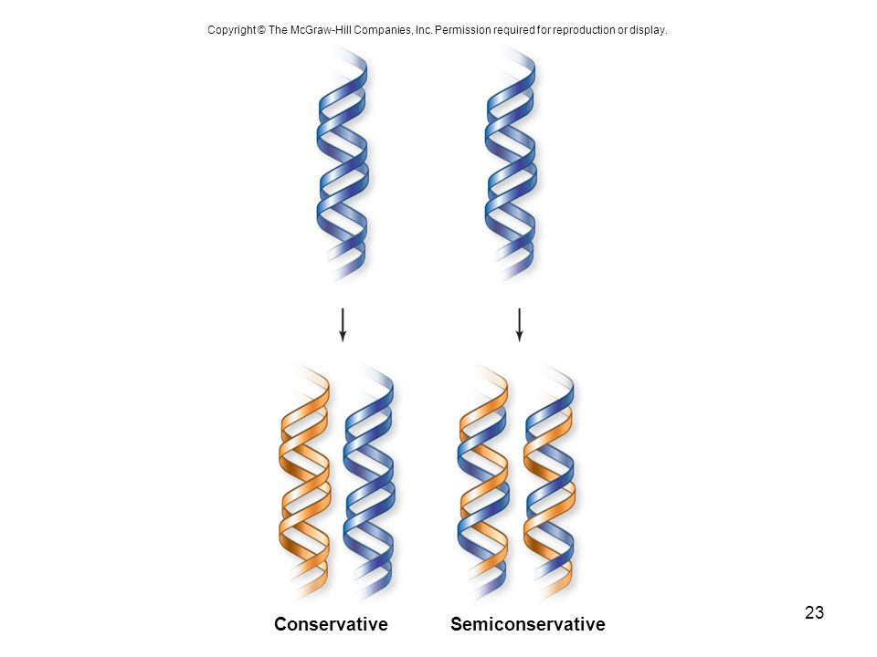 Conservative Semiconservative 23