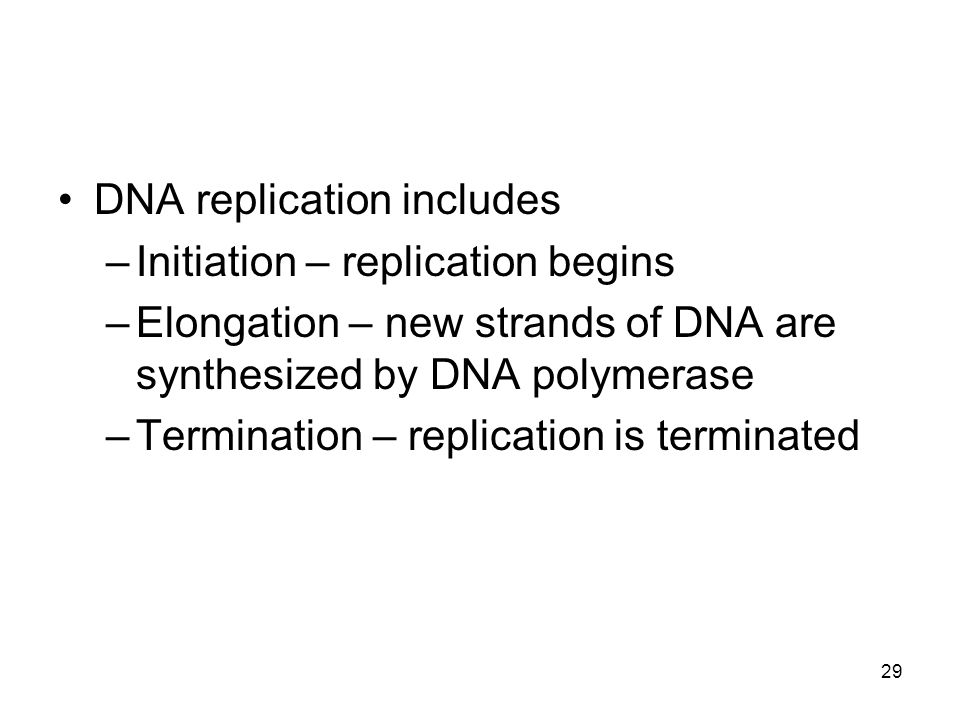 DNA replication includes