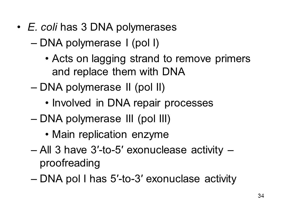 E. coli has 3 DNA polymerases