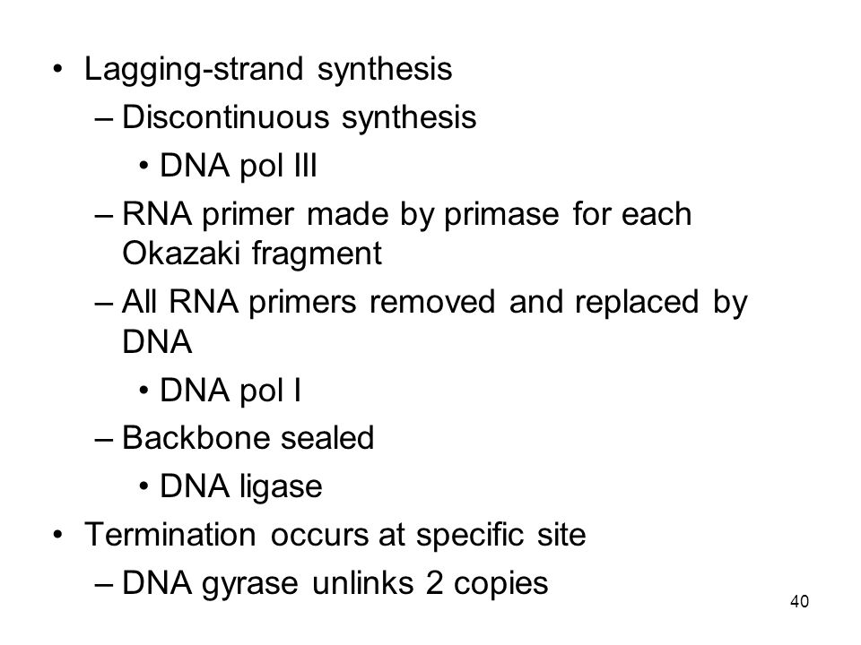 Lagging-strand synthesis