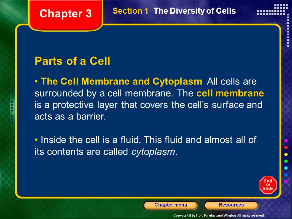 Chapter 3 Section 1 The Diversity of Cells. Parts of a Cell.