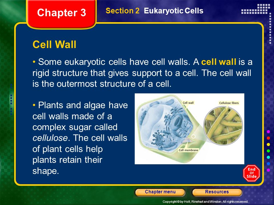 Chapter 3 Section 2 Eukaryotic Cells. Cell Wall.