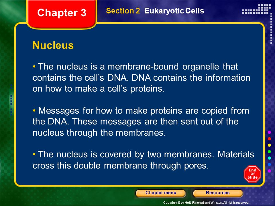 Chapter 3 Section 2 Eukaryotic Cells. Nucleus.