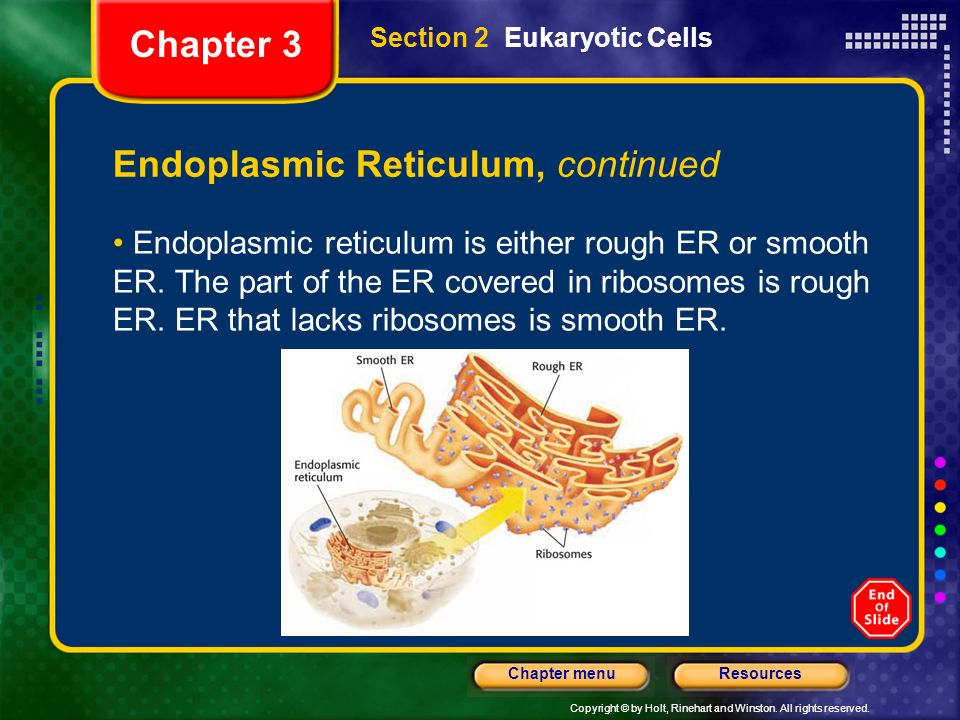 Endoplasmic Reticulum, continued