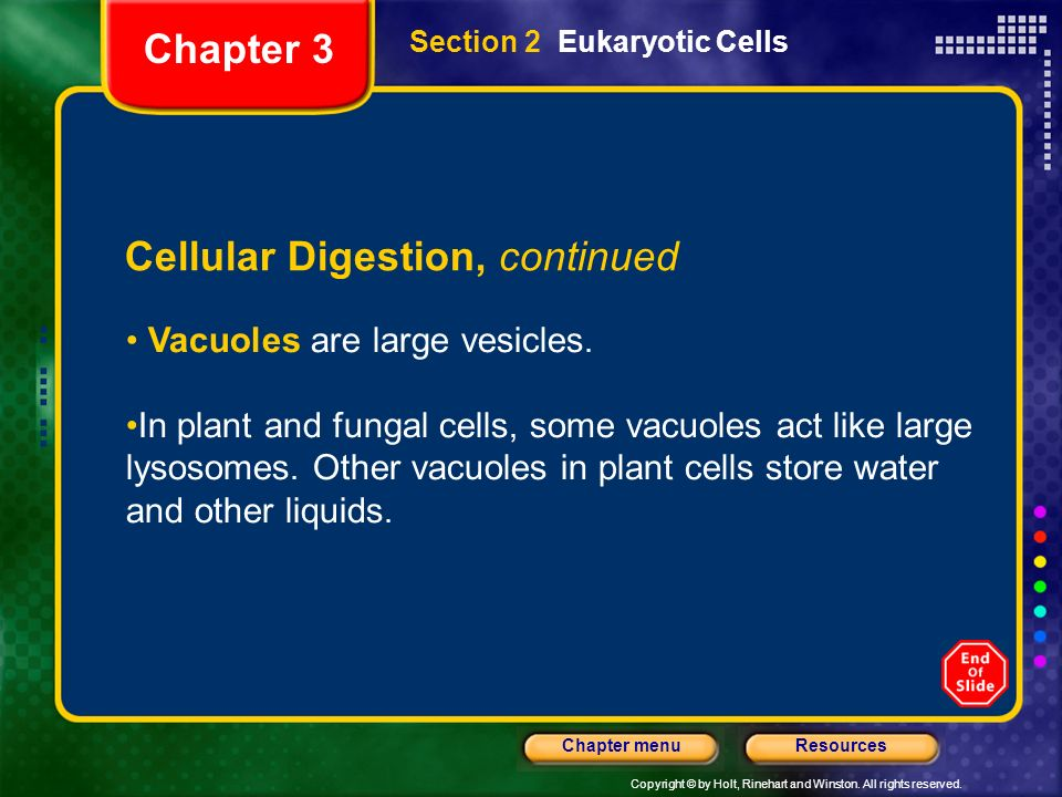 Cellular Digestion, continued