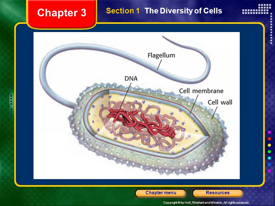 Chapter 3 Section 1 The Diversity of Cells