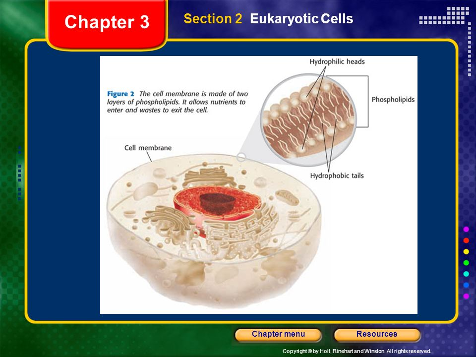Chapter 3 Section 2 Eukaryotic Cells