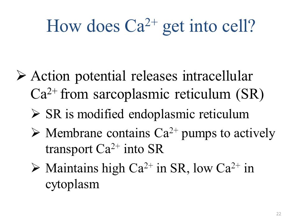 How does Ca2+ get into cell