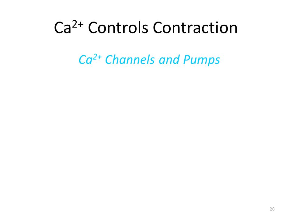 Ca2+ Controls Contraction