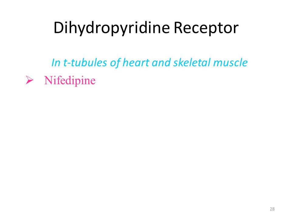 Dihydropyridine Receptor