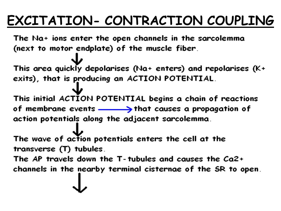 EXCITATION- CONTRACTION COUPLING