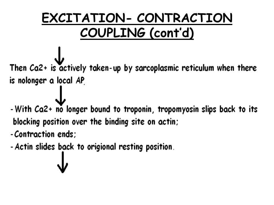 EXCITATION- CONTRACTION COUPLING (cont'd)