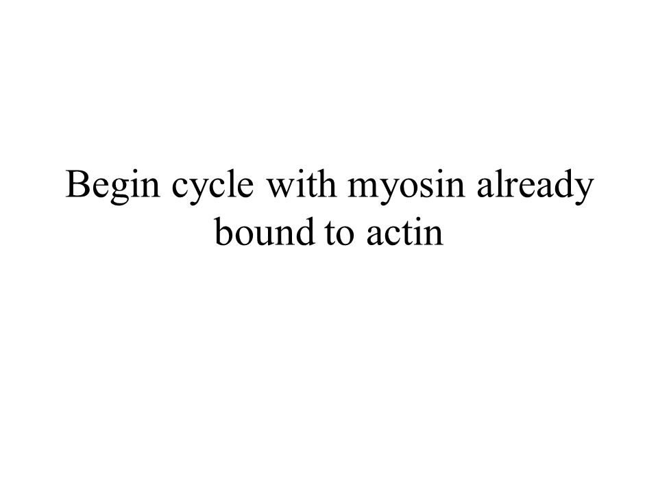 Begin cycle with myosin already bound to actin