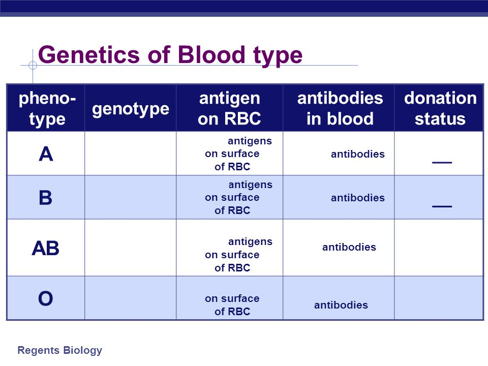 Genetics of Blood type A A A or A i B BB or B i AB O i i pheno-type