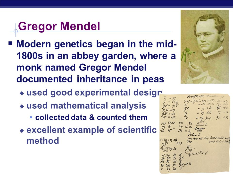 Gregor Mendel Modern genetics began in the mid-1800s in an abbey garden, where a monk named Gregor Mendel documented inheritance in peas.