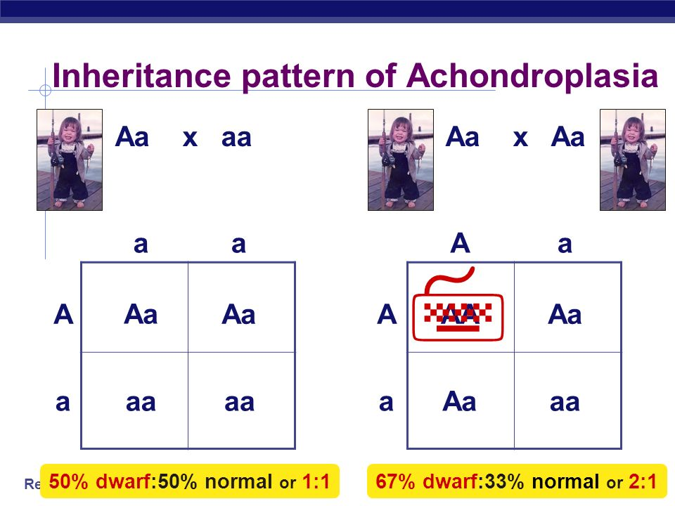 Inheritance pattern of Achondroplasia