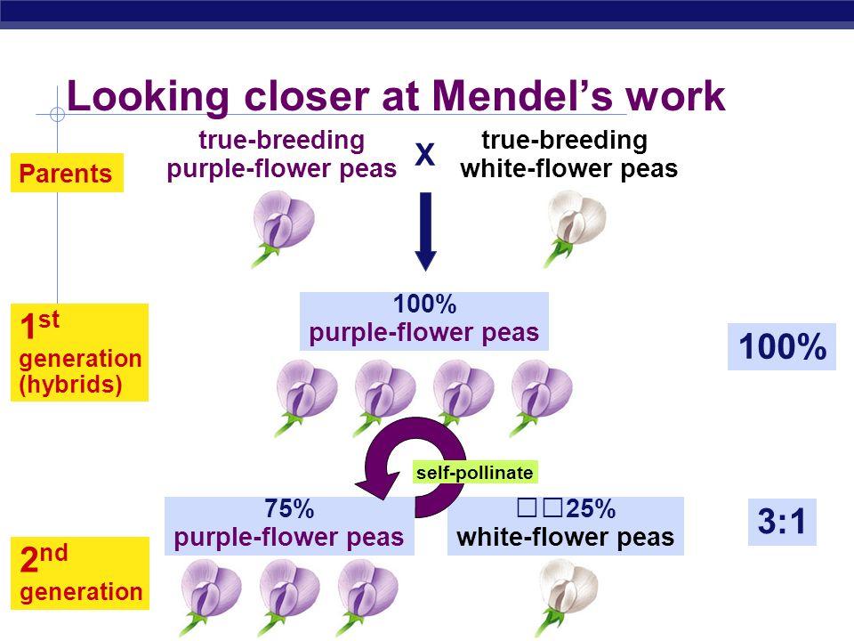 Looking closer at Mendel's work