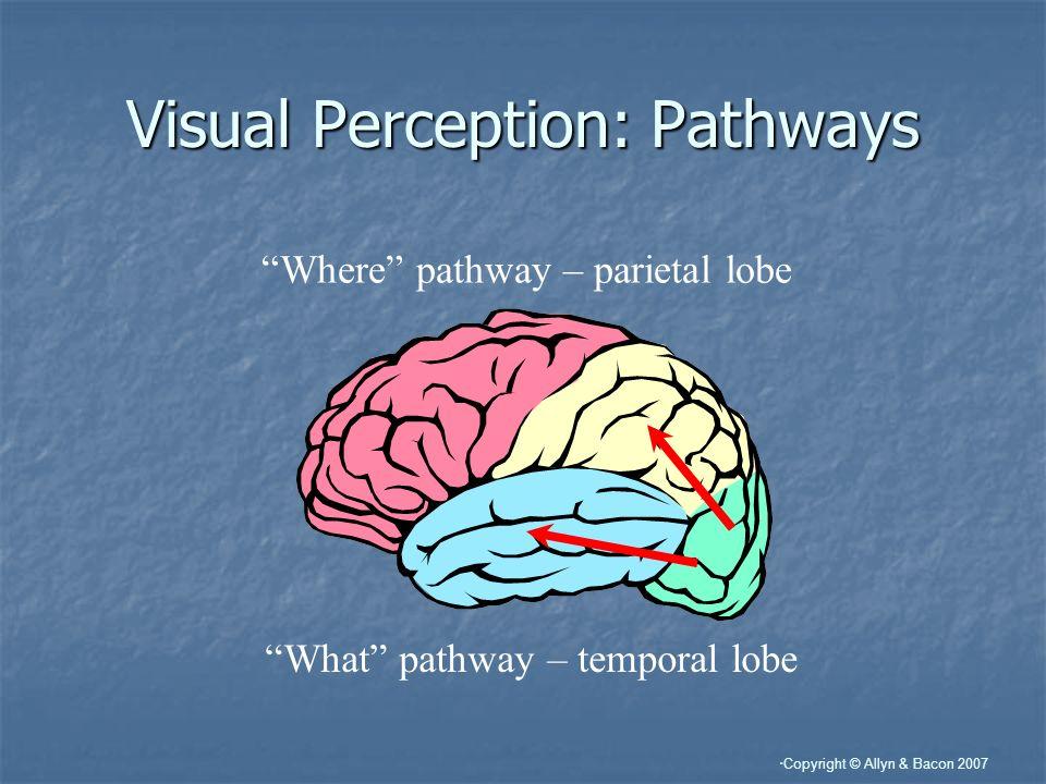 Visual Perception: Pathways