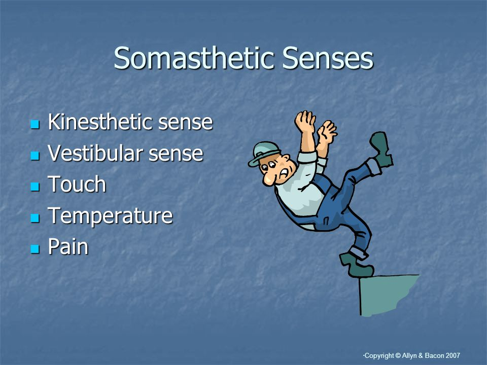 Somasthetic Senses Kinesthetic sense Vestibular sense Touch