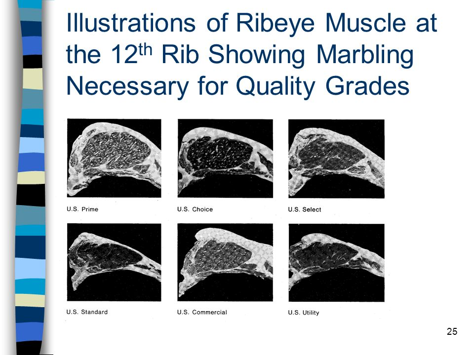 Illustrations of Ribeye Muscle at the 12th Rib Showing Marbling Necessary for Quality Grades
