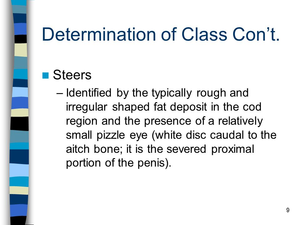 Determination of Class Con't.