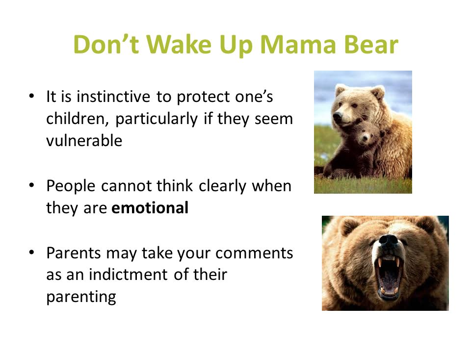 Don't Wake Up Mama Bear It is instinctive to protect one's children, particularly if they seem vulnerable.