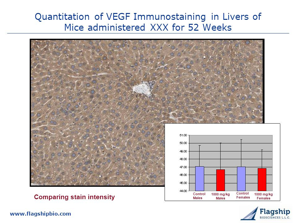 3/25/2017 Quantitation of VEGF Immunostaining in Livers of Mice administered XXX for 52 Weeks. Comparing stain intensity.