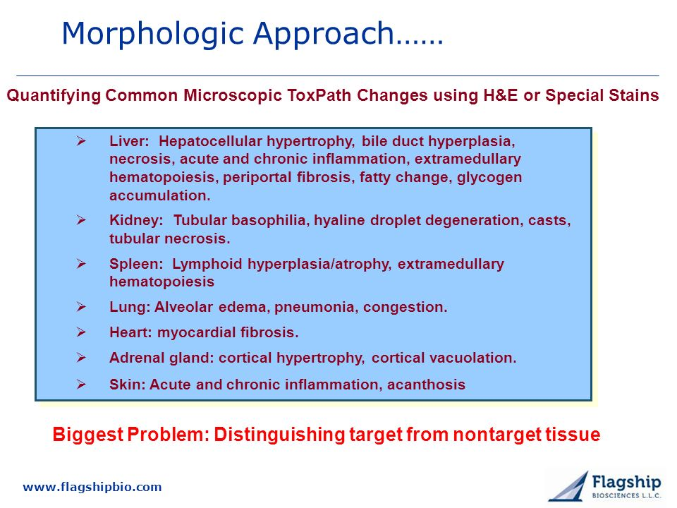 Morphologic Approach……
