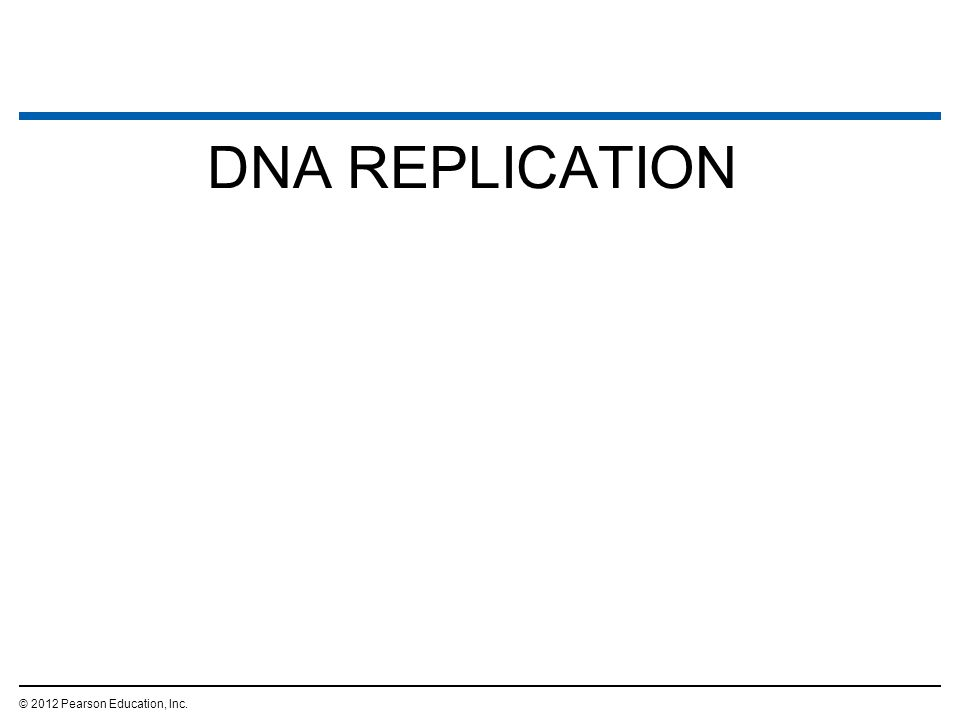 DNA REPLICATION © 2012 Pearson Education, Inc. 2