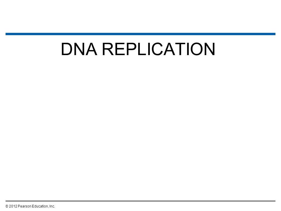 DNA REPLICATION © 2012 Pearson Education, Inc. 2