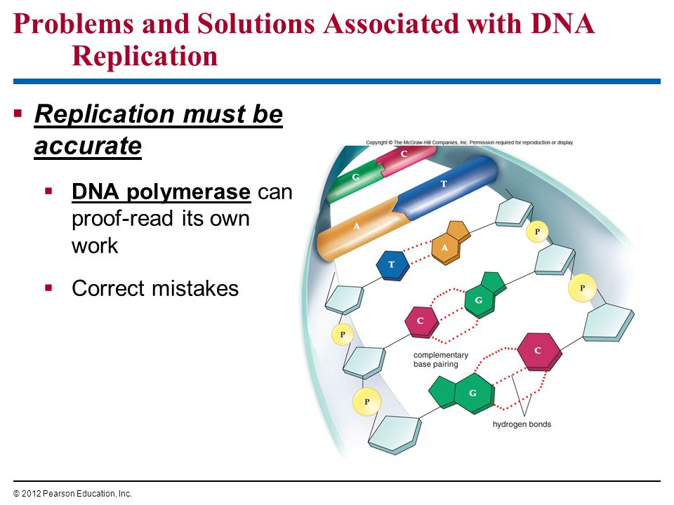 Problems and Solutions Associated with DNA Replication