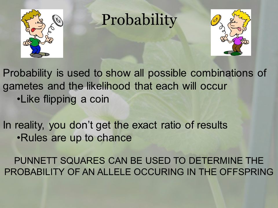 Probability Probability is used to show all possible combinations of gametes and the likelihood that each will occur.