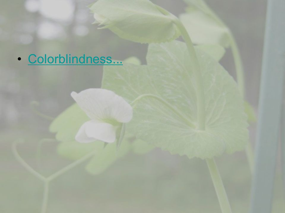 Colorblindness...