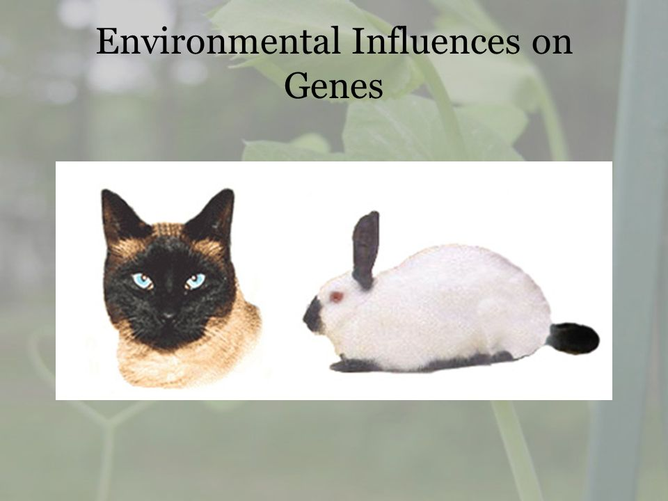 Environmental Influences on Genes
