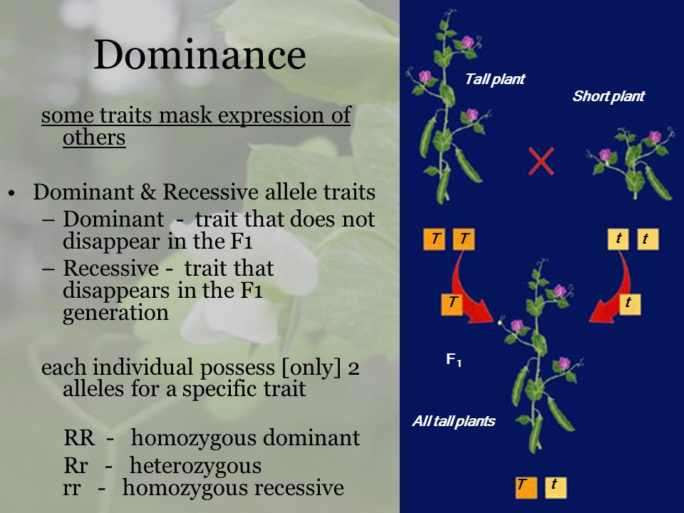 Dominance some traits mask expression of others