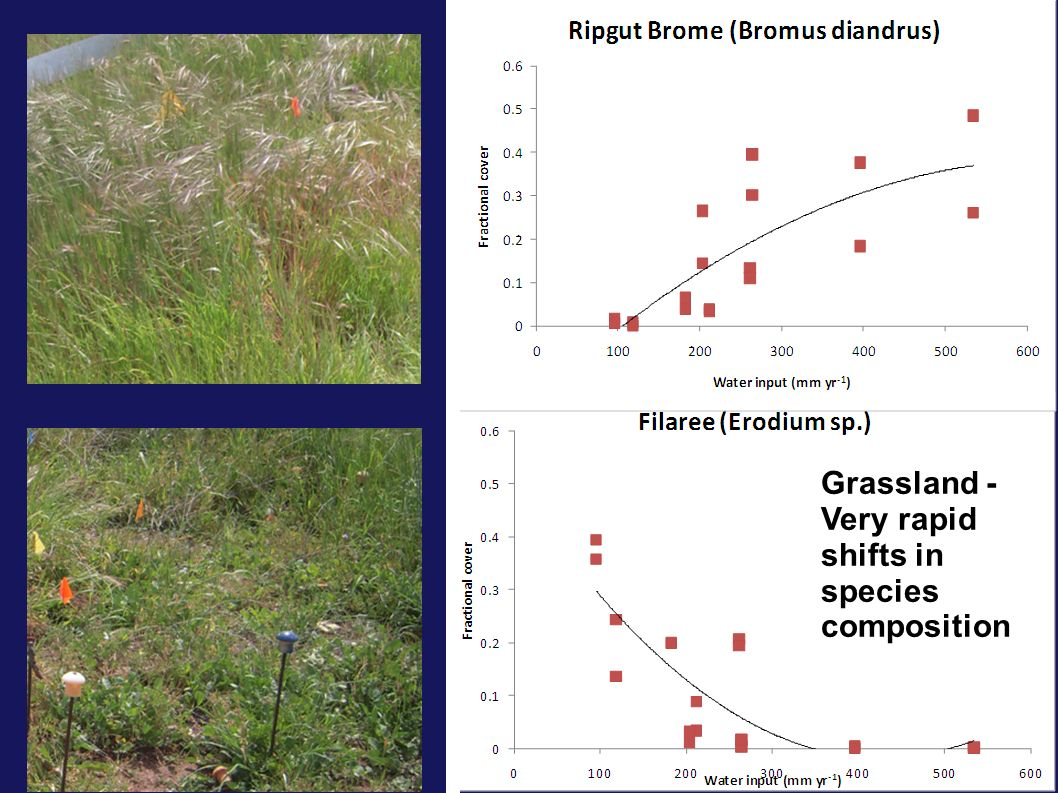 Grassland - Very rapid shifts in species composition