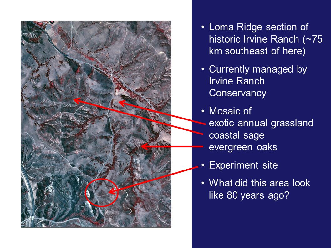 Loma Ridge section of historic Irvine Ranch (~75 km southeast of here)