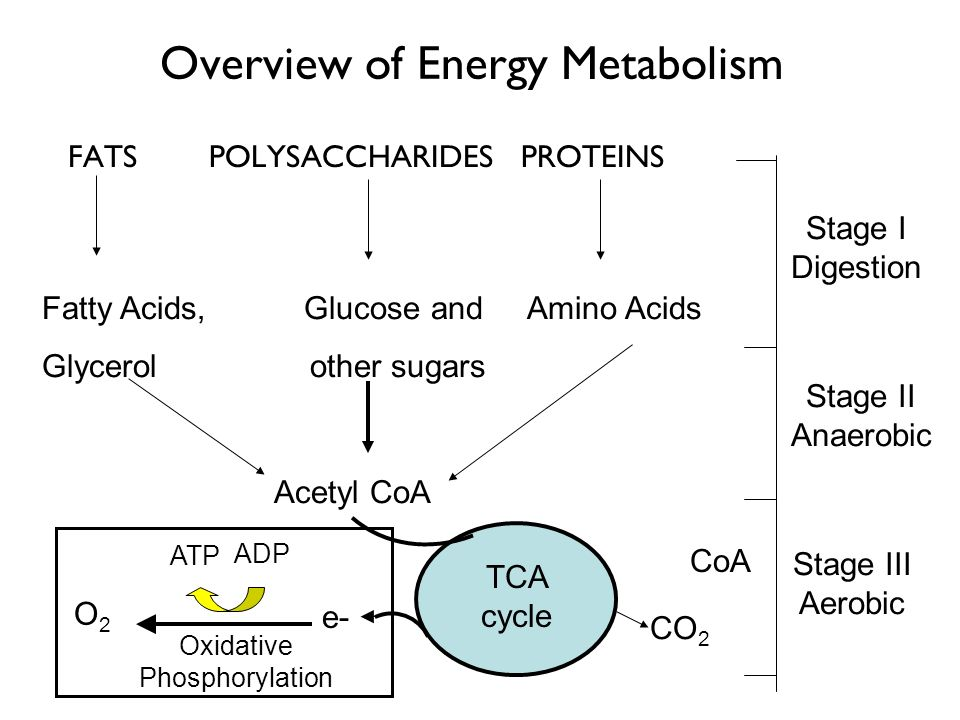 Overview of Energy Metabolism