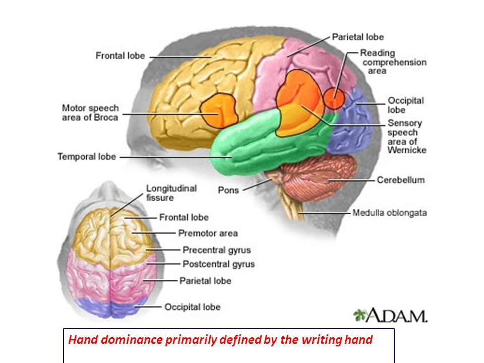 Hand dominance primarily defined by the writing hand