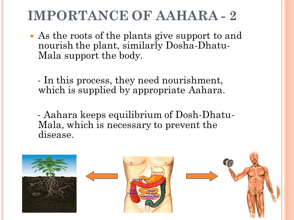 IMPORTANCE OF AAHARA - 2 As the roots of the plants give support to and nourish the plant, similarly Dosha-Dhatu-Mala support the body.