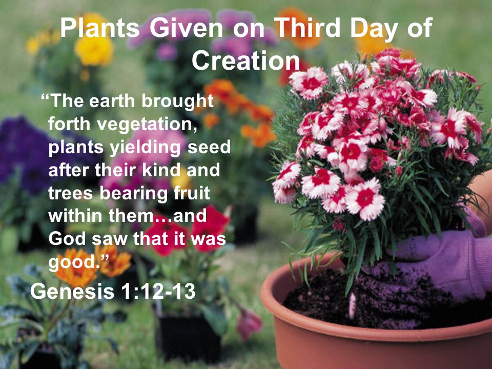 Plants Given on Third Day of Creation