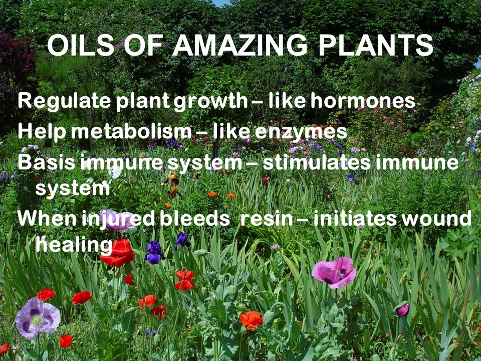 OILS OF AMAZING PLANTS Regulate plant growth – like hormones