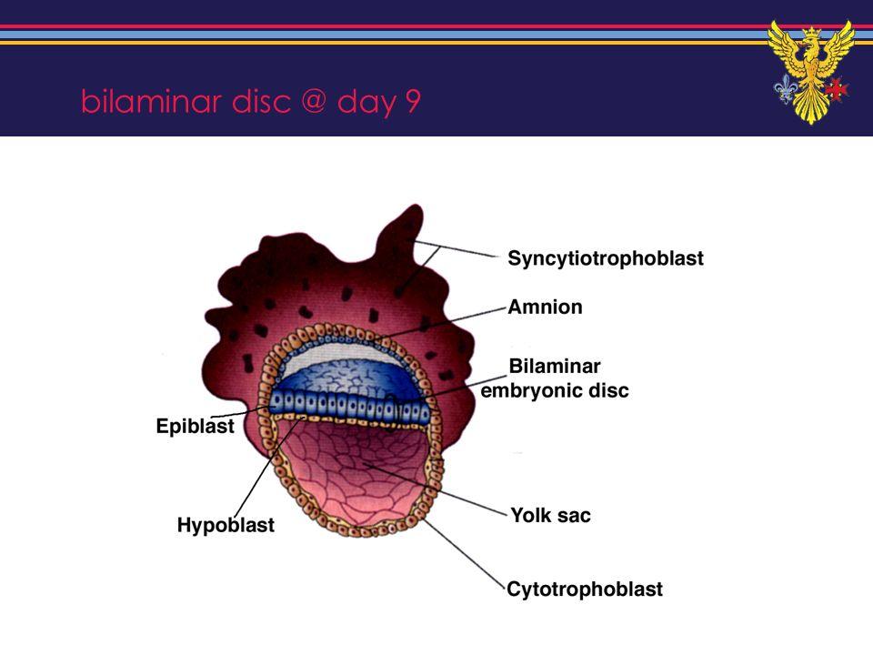 bilaminar disc @ day 9