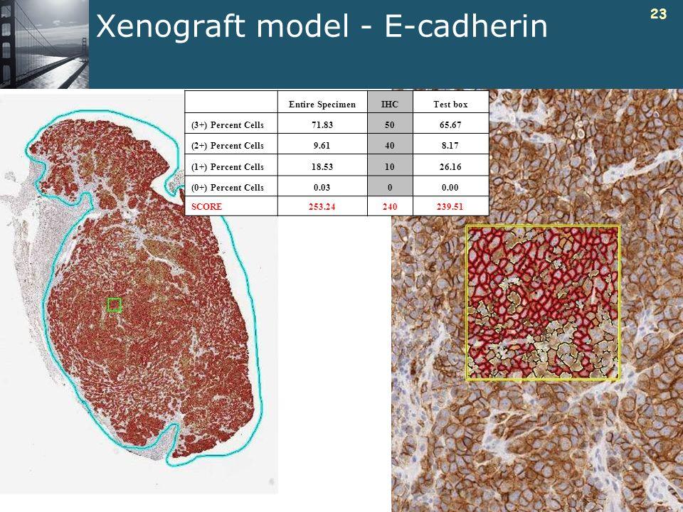 Xenograft model - E-cadherin