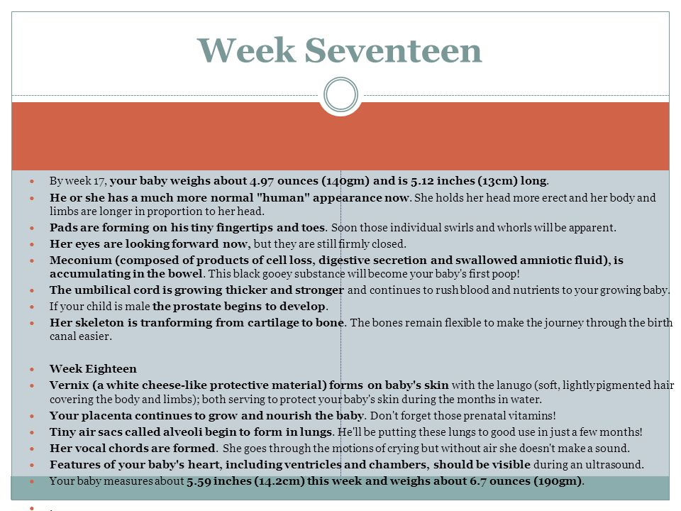 Week SeventeenBy week 17, your baby weighs about 4.97 ounces (140gm) and is 5.12 inches (13cm) long.