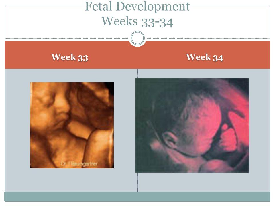 Fetal Development Weeks 33-34