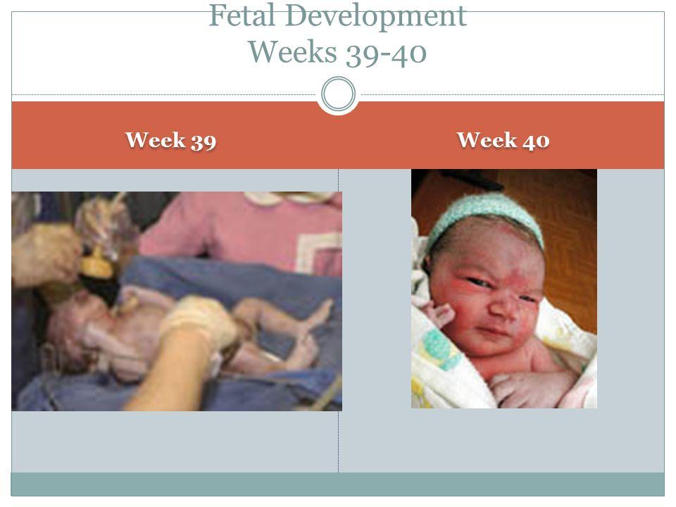 Fetal Development Weeks 39-40