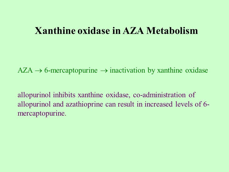 Xanthine oxidase in AZA Metabolism